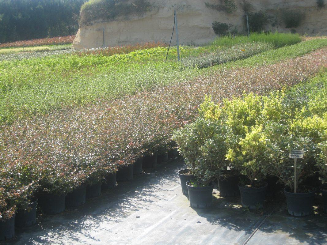 Pépinières Pilaud - Peyrins - Drôme - Arbres et arbustes en culture hors-sol et pleine terrre